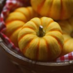 かぼちゃの種とひまわりの種!美容に良くても食べすぎじゃ太ります!