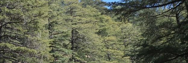 Catchment Area Shimla
