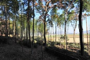 竹林から瓶割山方向