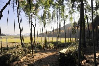 竹林から雪野山・布施山方向