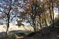 安吉山/安妃山(雪野山北西部)山裾の紅葉