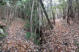 瓶割山(長光寺山)岩倉山峠道-谷筋ルート - 登山道2