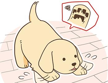 犬にとって滑りやすい床は危険、ペット専用のフローリングやワックス及びコーティングで対策が可能です