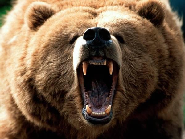grizzly-roar