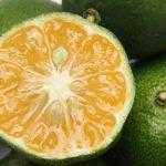 脂肪燃焼スイッチを入れる沖縄シークヮーサー 細胞内受容体活性化