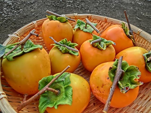 収穫した渋柿