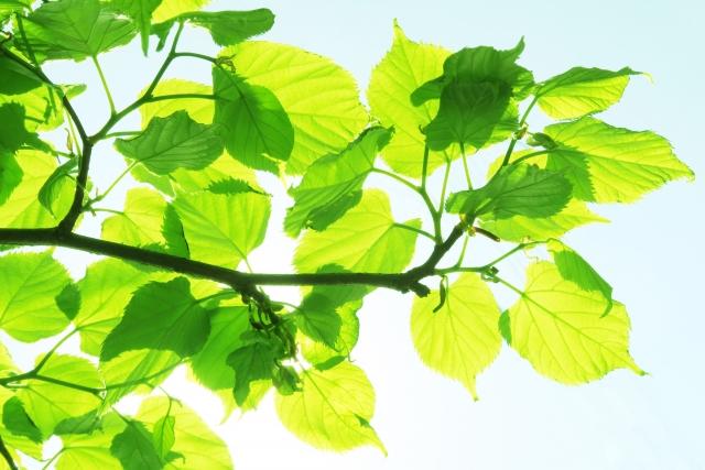緑の葉っぱと青空