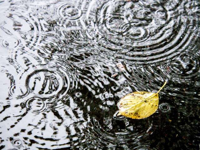 水たまりに浮かぶ葉っぱ
