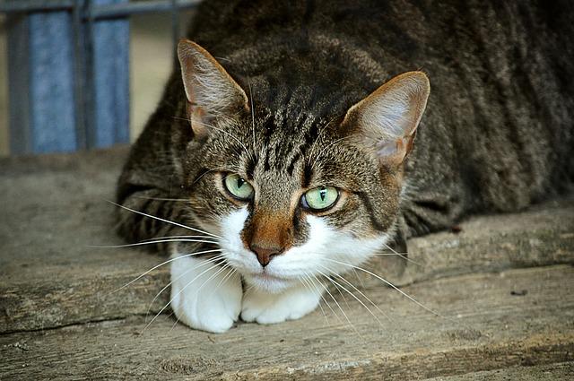警戒してこちらを見る猫