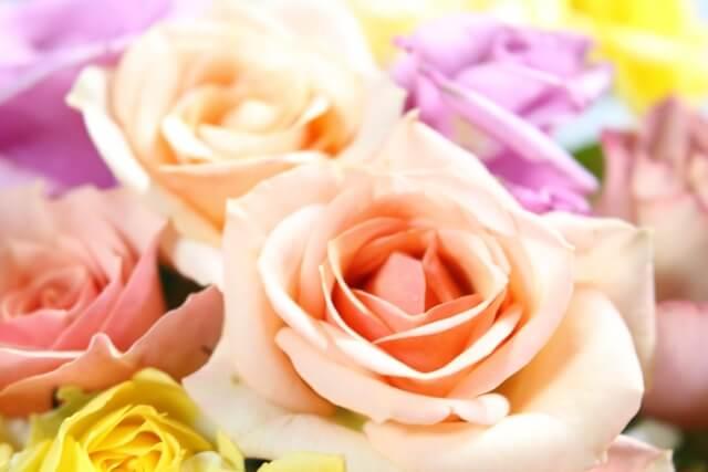 綺麗なバラの花束