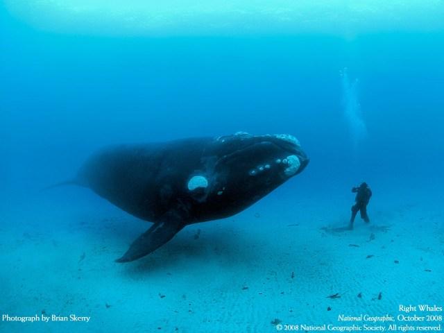 humbling_whale