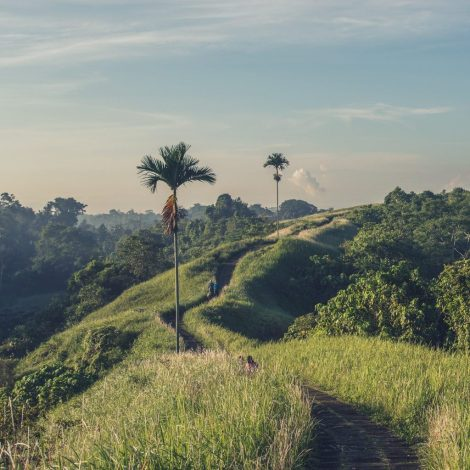 Campuhan Ridge walk on our yoga retreat Bali