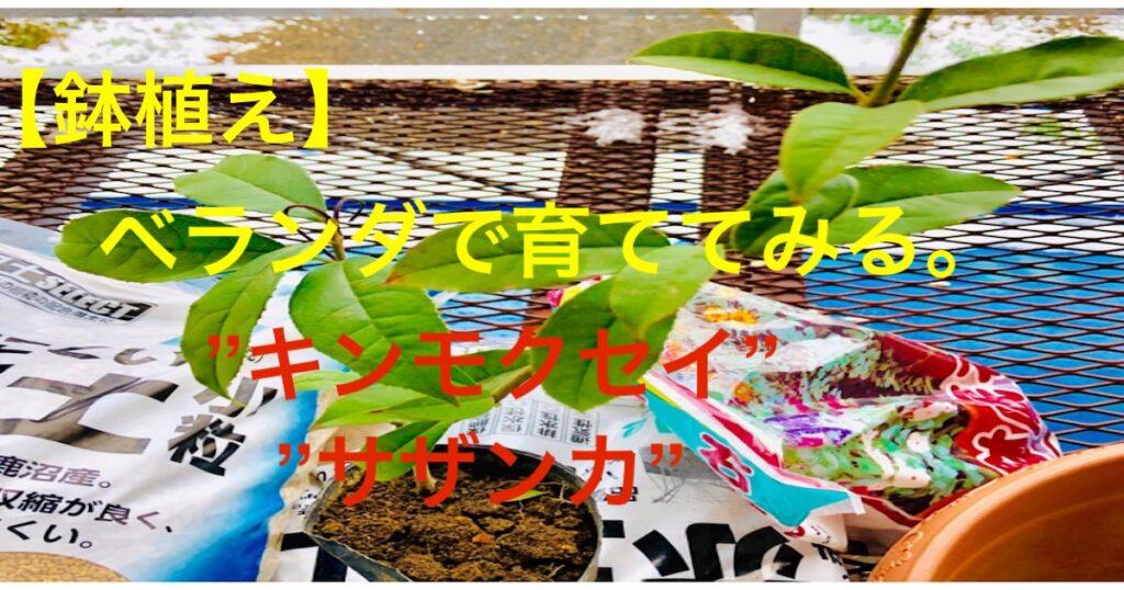 鉢植えトップ