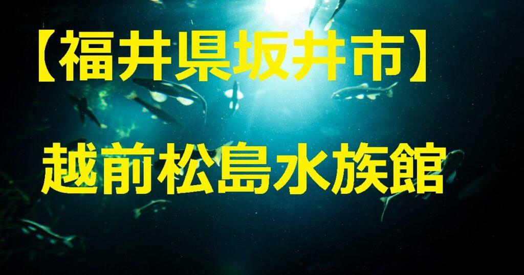 越前松島水族館トップ