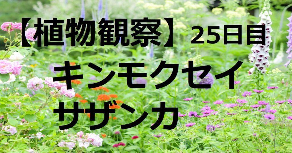 キンモクセイサザンカ25日目トップ