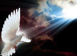 white-dove-message