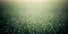 Grass-s