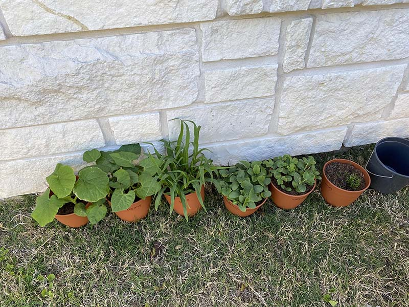 Shining Stars Montessori School Gardening