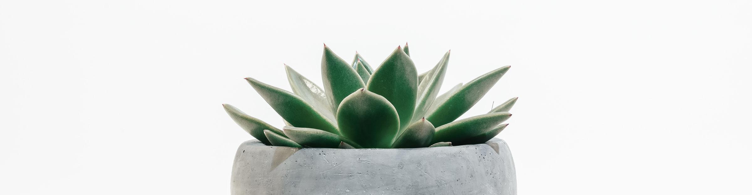 succulent-bg