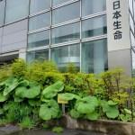日本生命新札幌営業所