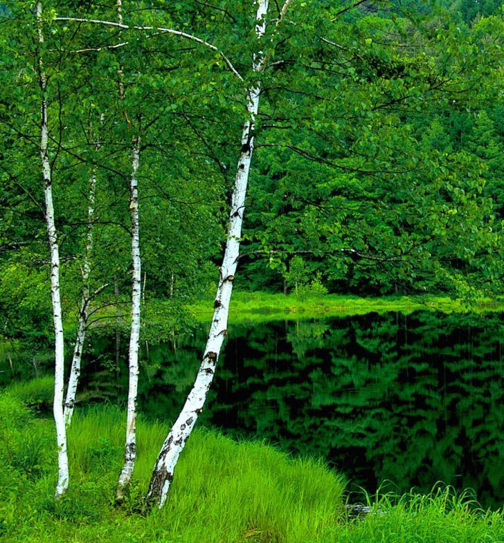 御射鹿池の池面に映る周囲の木々に注目!