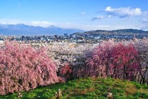 弘法山古墳桜まつり