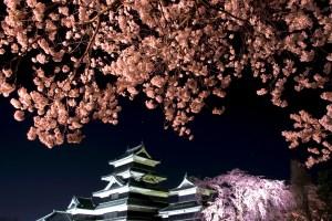 国宝松本城『夜桜会』