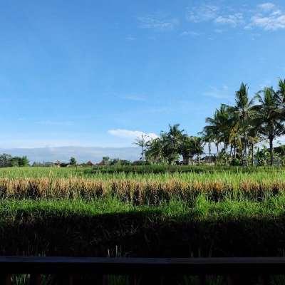 Bosan Dengan Pantai Di Bali? Cobain Ke Ubud Deh!