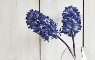 Neptune Hyacinth Stem