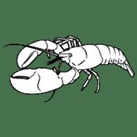 lobster - Fresh Lobster anyone..??