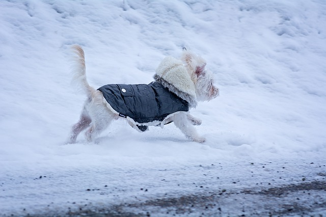 dog in winter gear