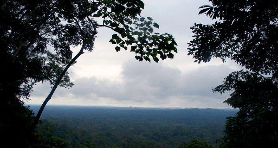 Yasuni Amazon Nature Tour-Beauty