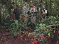 Boa Constrictor resting in front of amazon explorers, Yasuni Biosphere Reserve.