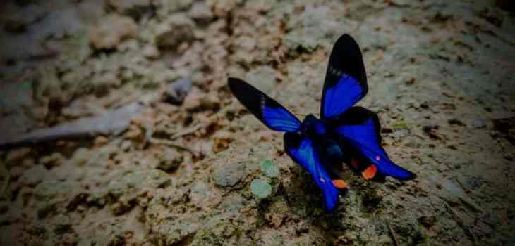 The Butterflies of the Amazon Rainforest in Ecuador