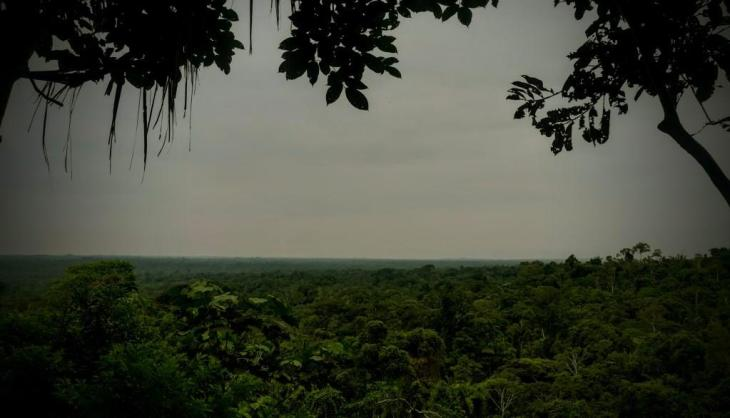 Common Trees of the Amazon Rainforest