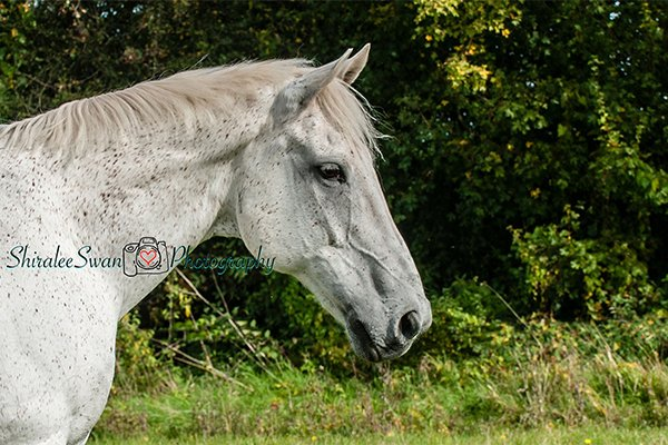 Natural Equine Portrait by Shiralee