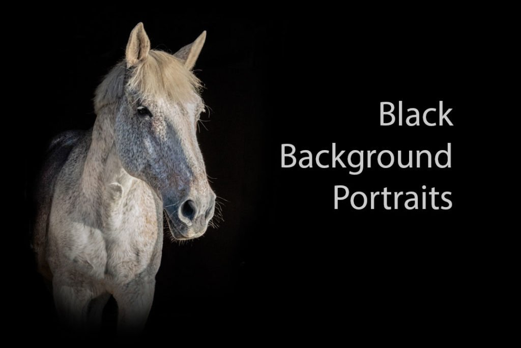 Black background portraits