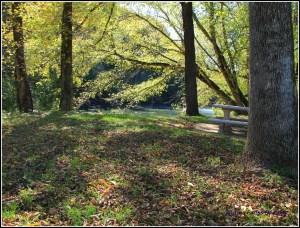 Fallen leaves along the path.