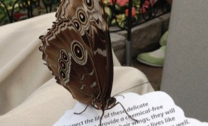 Butterfly Thoughts