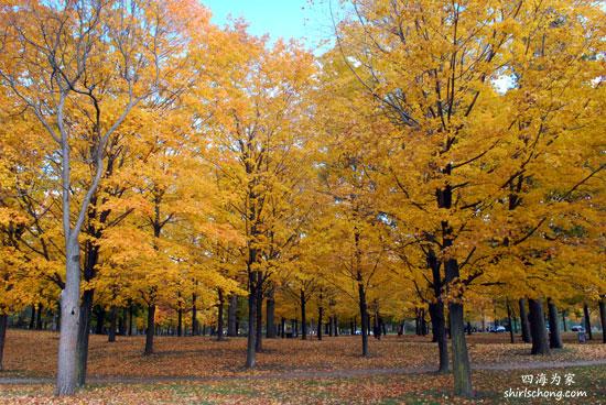 Autumn at High Park