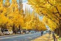 明治神宮外苑の紅葉の見ごろはいつですか?最新駐車場情報もアリ!