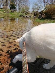 泉ボタニカルガーデンの池、おたまじゃくし