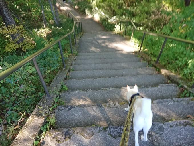 階段をどんどん降ります