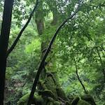 苔につつまれた豊かな森を歩く