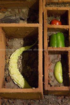 rights.www.shirshakbaniya.wordpress.com_1882 copy