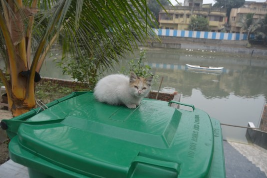 Cat welcome, Ganga not welcome