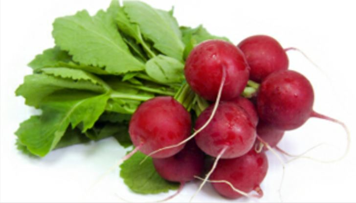 Radish /the Wonder Root!!(Mooli)