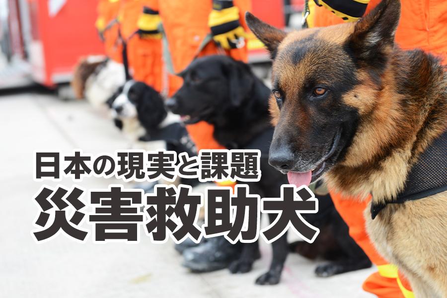 災害救助犬とは?災害救助における日本の現実と課題を紹介します!