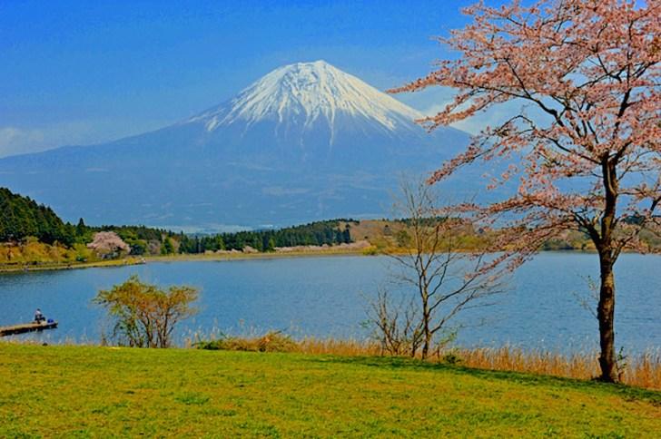 田貫湖畔は知る人ぞ知る桜の名所