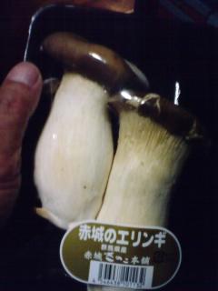 mushrooms-eringe-1